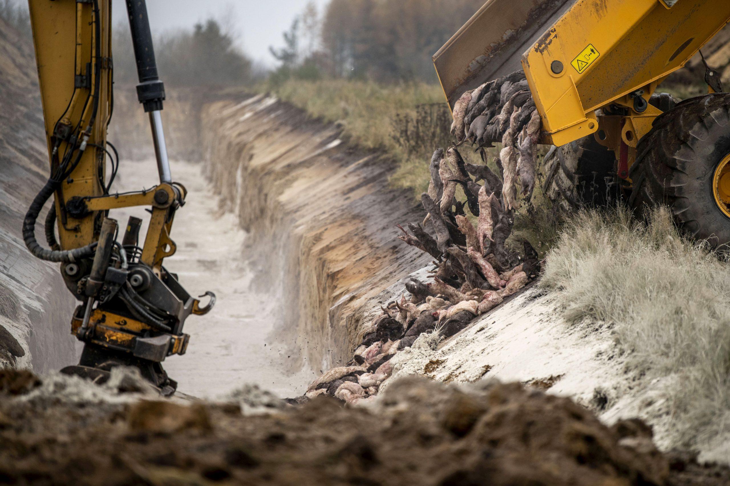 """<span class=""""rodt""""></span>Bag billedet: Billeder af massegrave går verden rundt"""